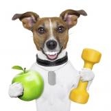 כלב עם תפוח ומשקולת