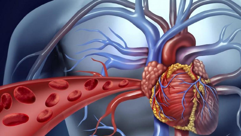 בריאות הלב – 10 טיפים לשמירה