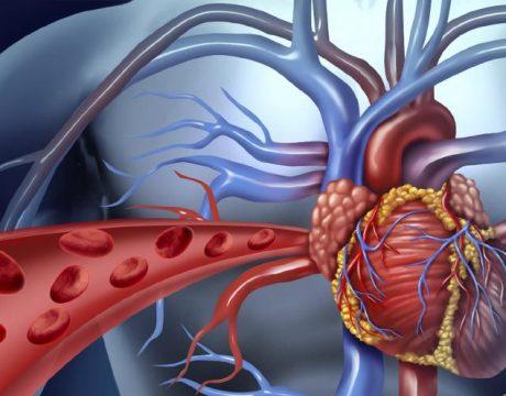 לב מוקטן - בריאות הלב - 10 טיפים לשמירה